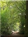 ST5573 : Path, Leigh Woods by Derek Harper