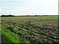 TL4775 : Arable land, Haddenham by Andrea
