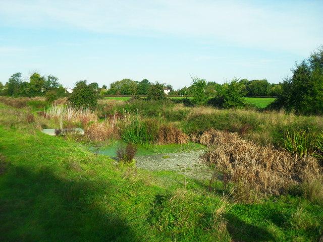 Pond with dipping platform, Haddenham