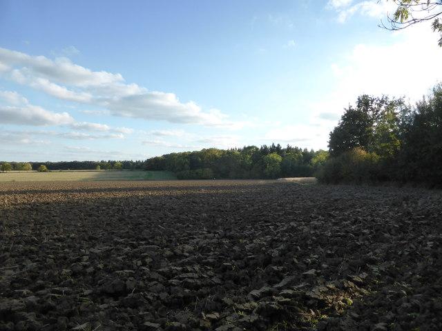 Field next to Callan's Lane Wood