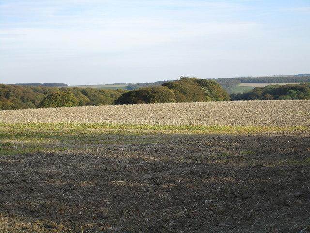 View towards Warren Dale