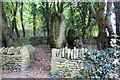 SP3723 : Hoar Stone, a prehistoric burial chamber in its enclosure by Roger Templeman