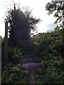 TM0760 : Footpath off Rendall Lane by Adrian Cable