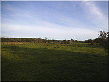 TQ0357 : Field looking towards the remains of Newark Abbey by David Howard