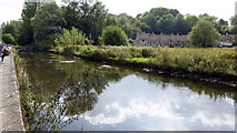 SP1106 : River Coln - Bibury by Roger Gittins