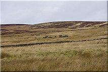SD9433 : Greave ruins by Bill Boaden