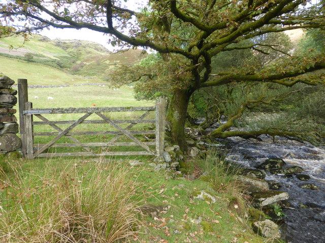 Lichen covered gate & Afon Cynfal