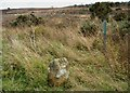 NZ9003 : Boundary stone and waymarker, Fylingdales Moor by Christopher Hall