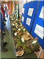 SP9314 : A Fungi Exhibition in The Barn at College Lake by Chris Reynolds