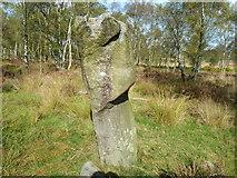 SK2773 : Ancient Stone by Tony Bacon