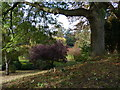 SK5804 : Tree on Leicester Castle Motte by Mat Fascione