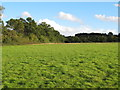 TQ4394 : Twenty Two Acres, Roding Valley Meadows Nature Reserve by Roger Jones