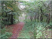 NT5042 : Path into Big Wood by M J Richardson