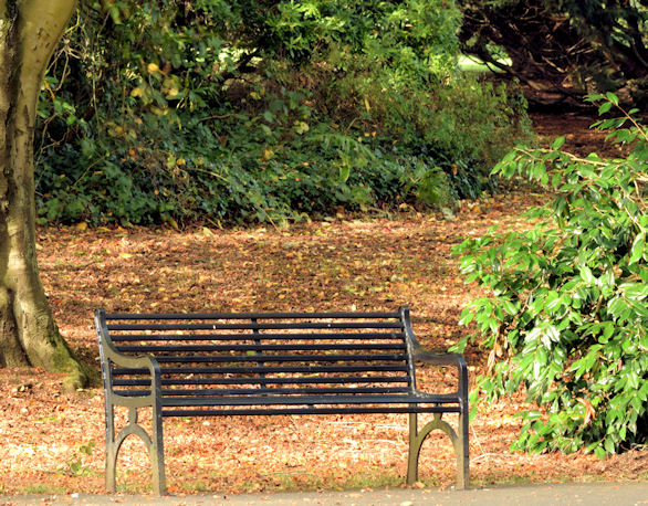 Autumn seat, Musgrave Park, Belfast (October 2014)