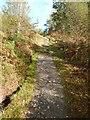 NS3697 : West Highland Way near Carraig by Dave Kelly