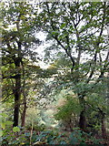 SE1223 : Cromwell Wood through trees by Michael Steele