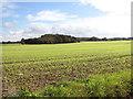 TG2500 : Fields by Abbot's Farm by Evelyn Simak