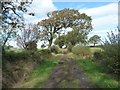 NY2448 : Arched tree over the Longhead Farm  public footpath by Christine Johnstone