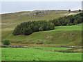 SD9669 : Plantations in Littondale by Trevor Littlewood