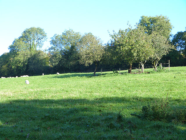Field with sheep above Clara Vale