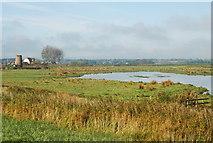 TG3504 : Grazing marsh and pool, Buckenham by Jeremy Halls