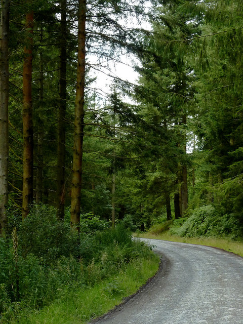 Forestry road south-east of Strata Florida, Ceredigion