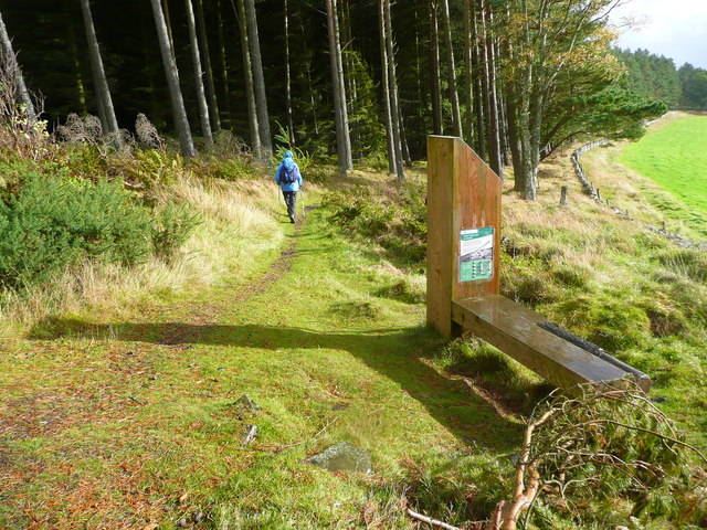 Footpath in the Glentress Forest