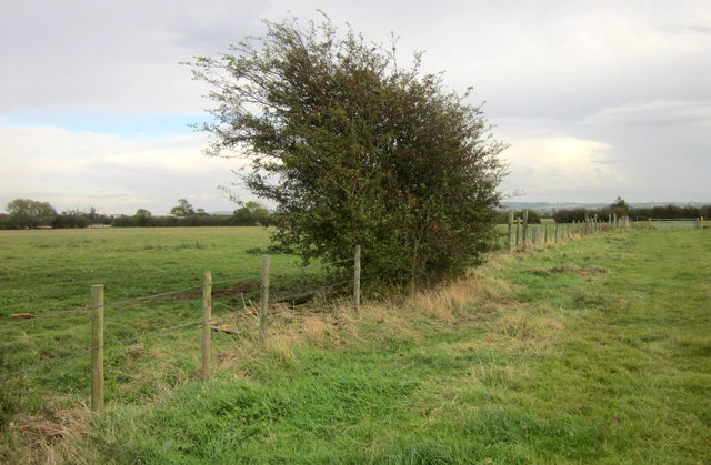 Bush and fence near Langar Grange