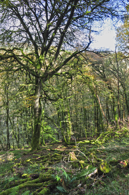 West Somerset : Woodland