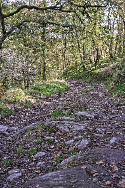 West Somerset : Woodland Path
