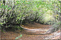 SS8928 : West Somerset : Woodland Track by Lewis Clarke