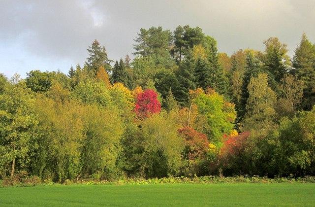 Hinchley Wood