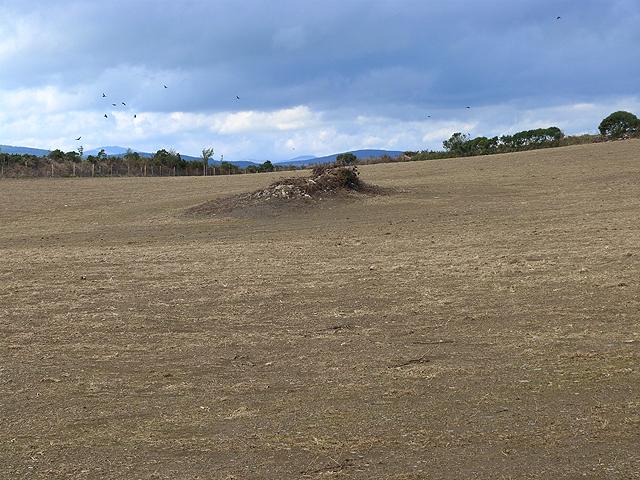 Bare field at Crone More