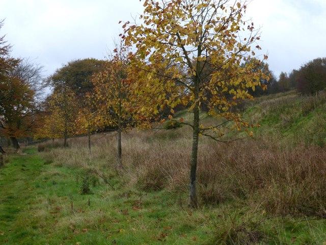 Autumn colour in Cuckoostone Dale