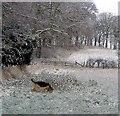 NU1922 : Frozen fields by David Chatterton