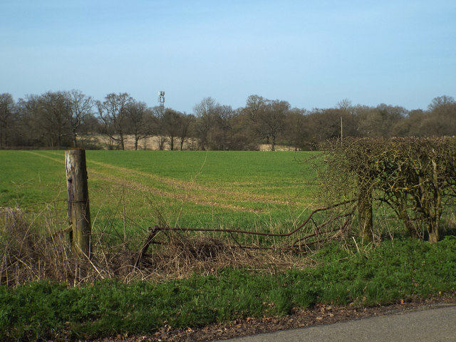 Grass crop by Barkers Lane, Inkford