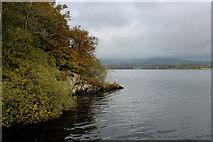 SD3898 : Shoreline South of Belle Grange Bay, Windermere by Chris Heaton