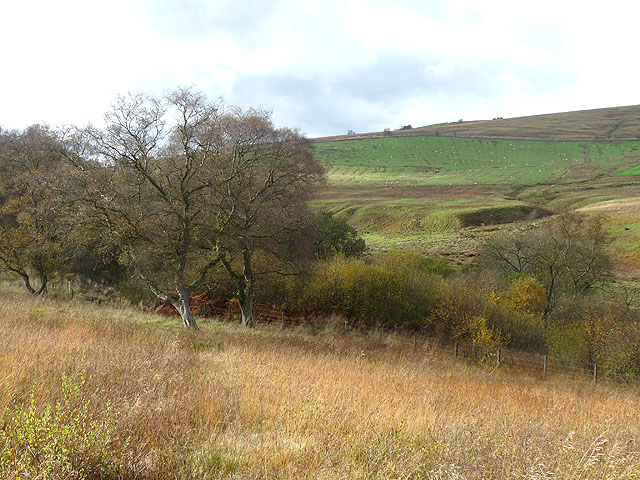 Scrubby woodland in Redesdale