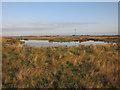TF5362 : Grazing marsh habitat creation by Hugh Venables