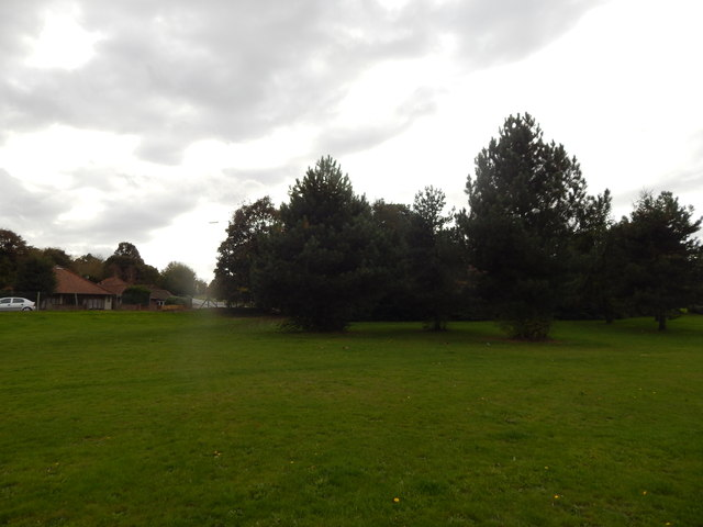 Trees at the edge of Gippeswyk Park