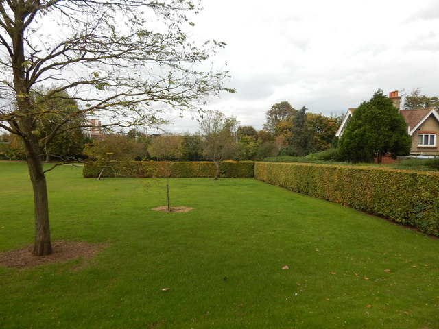 Hedges at Gippeswyk Park
