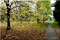 SO6024 : Leaves and footpath by Jonathan Billinger