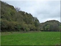 SS6807 : Westacott Wood near Coldridge Bridge by David Smith