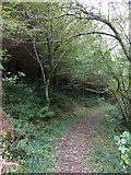 SS6808 : The Tarka Trail in Burrowcleave Wood (2) by David Smith