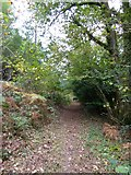 SS6908 : The Tarka Trail in Burrowcleave Wood (4) by David Smith