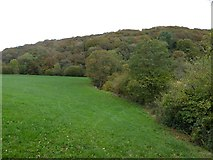 SS6908 : Valley of the River Taw and Park Wood by David Smith