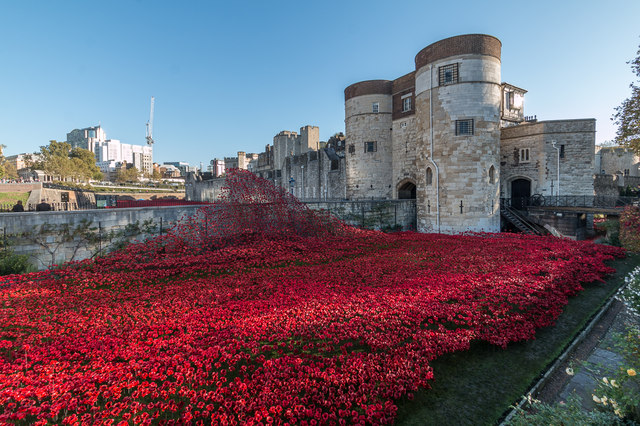 Poppies by the Tower, London