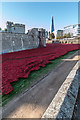 TQ3380 : Poppies by the Tower, London by Christine Matthews