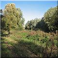 TL3369 : Path and drain at Fen Drayton Lakes by John Sutton