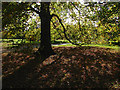 TQ1352 : Beech tree, Polesden Lacey by Alan Hunt